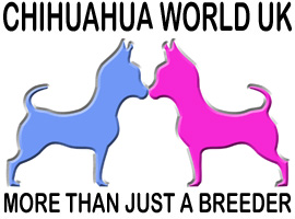 Chihuahua World UK
