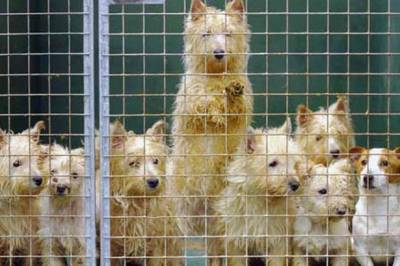 PUPPY FARMS IN THE NEWS AGAIN!